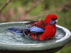bird in the fountain